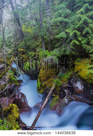 Fog Hangs in the Trees above the Moss Covered Avalanche Creek in Montana