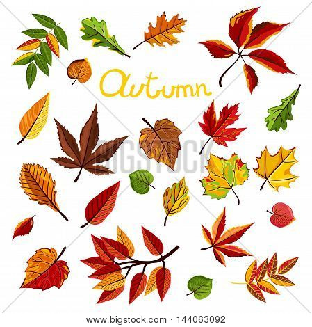 Autumn leaves collection vector illustration. Hand drawn autumn leaves in cartoon style. Design elements. Autumn leaves concept. Different autumn leaves. Abstract leaves. Autumn frame.