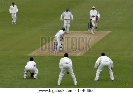 Cricket Action