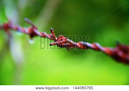 makro of old rusty barbed wire with spider web