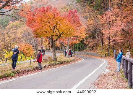 Fujikawaguchiko Yamanashi Japan - November 22 2015 : Unidentified tourist visiting the Koyo tunnel at autumn in Kawaguchiko Japan.
