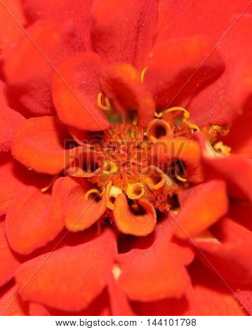 macro photo of the center of  a bright red/orange flower