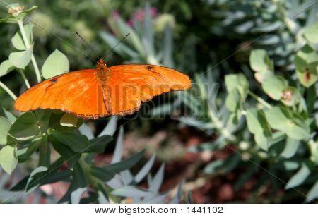 Butterfly Enjoying The Morning Sun