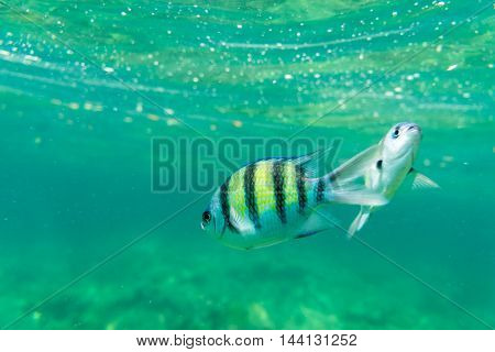 two of yellow side of sea fish underwater fild