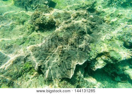 this is a dead coral reef underwater view