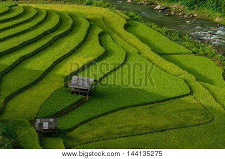 Green Rice fields on terraced in Muchangchai Vietnam Rice fields prepare the harvest at Northwest Vietnam.Vietnam landscapes.