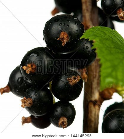 Tasty black currants on a branch over light-blue background