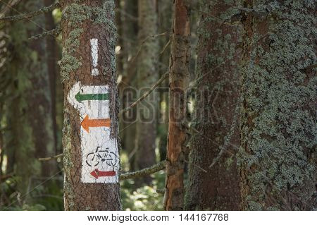 Poland Gorce Mountains trail blazing marks on a tree trunk at Gorce Mountains National Park poster