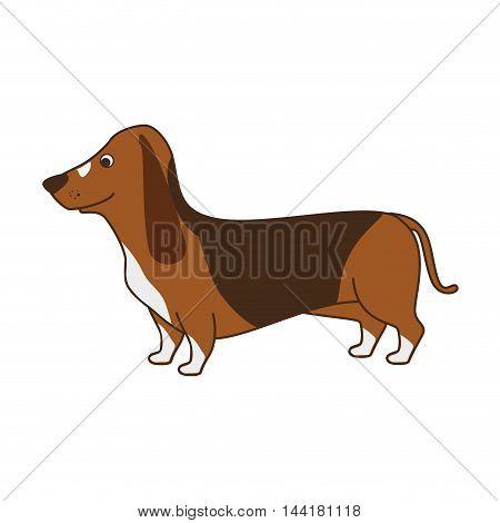 daschshund dog breed cute puppy canine vector illustration
