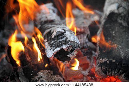 Flame dances on charred firewood logs at bonfire