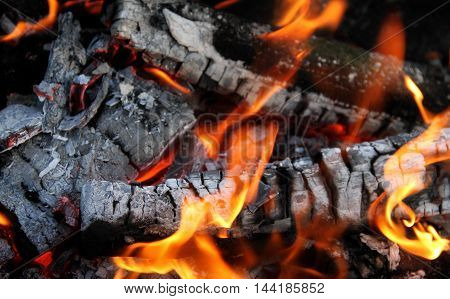Flame dances on charred firewood logs in the bonfire