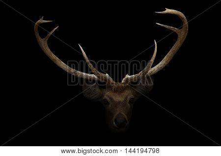 Elds Deer In The Dark