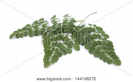 Moringa leaves over white background vegetable nature