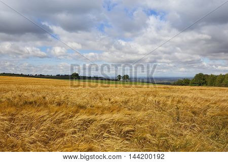 Barley And Vale Of York