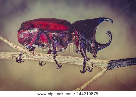 Scarab beetle in forest. Closeup realistic colorful tropical beetle perched on a branch at nighttime. Vintage tone effect.