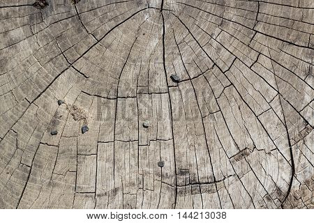 transverse cutting of an old dry wood