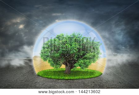 Concept of life. The Tree of Life in the protection sphere in the desert. Part of nature on a background of total destruction. Concept of doubleness. Save the planet.