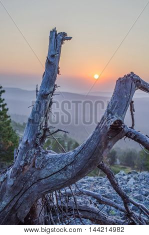 The morning sun appears between broken branches of the old snag