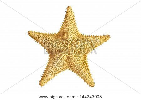 big seastar starfish on a white background