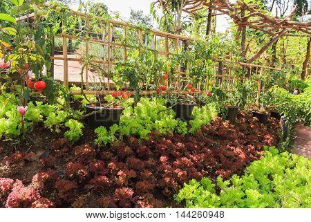 Vegetable nontoxic garden for good healthy food.