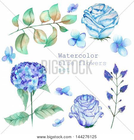A set with the isolated floral elements in the form of watercolor blue flowers and leaves, blooming flowers (Hydrangea, Myosotis) on a white background for a decoration