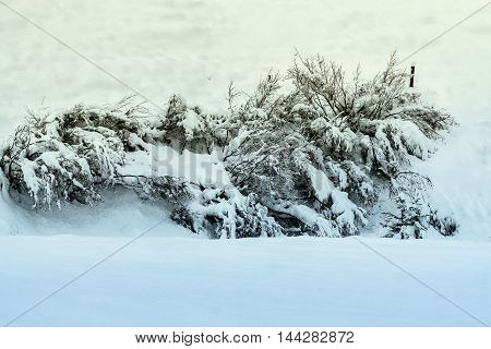 Branch Of Trees Or Plants Covered By Frozen Snow