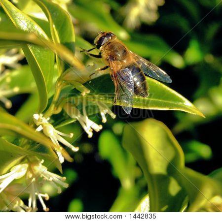 Bee & Plant