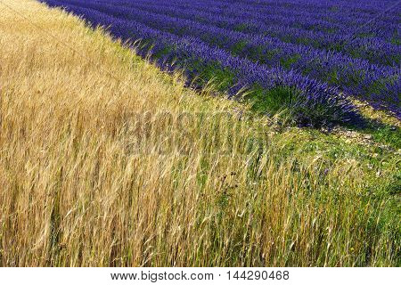 Provence Countryside. France