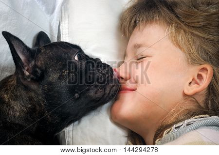Dog wakes owner kiss licking the face nose. Concept - Good morning happy awakening of love and affection