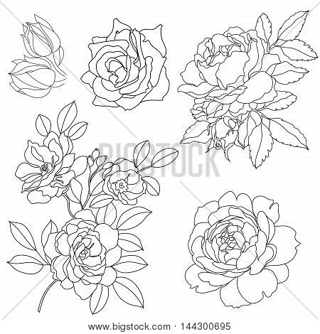 Set of graphical decorative roses, graphic roses, blossom roses, tattoo roses, summer roses, sketchy roses. contour roses, vintage roses, pattern roses, silhouette roses. Vector.