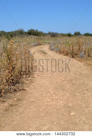 Sun Scorched Track with Vegetation in Crete
