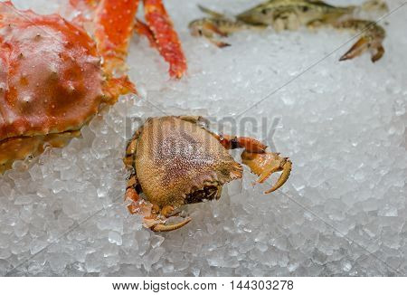 Fresh raw crab on ice. Seafood. Moskow