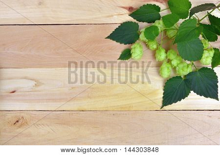 Beer brewing ingredients Hop on wooden old table. Beer brewery concept. hops on vintage background.Top view.