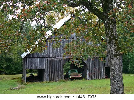 an old green truck parked in a barn under a tree with changing foliage