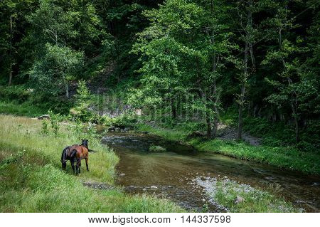 Horses near Ruined Poenari Castle on Mount Cetatea in Romania