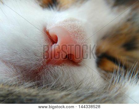 Pink cat's nose animal pet scent smell wool biology macro closeup