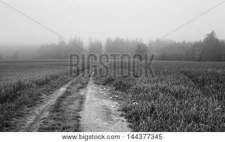 The path in the field of Horni Stepanov. In the distance is a forest shrouded in mist. Black and white. Moravian landscape.