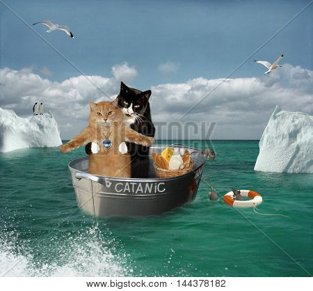 Two brave cats are traveling on a ship among the icebergs. Their ship is a ordinary basin for washing. It is called Catanic.