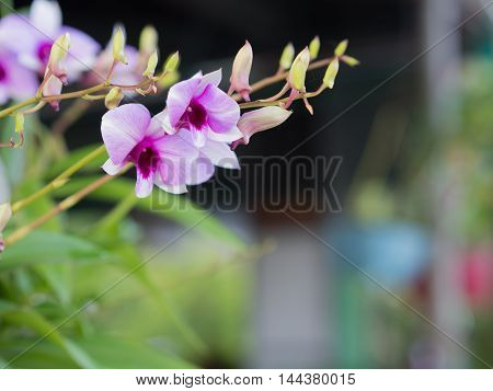 Purple orchids in coffee shops. in Thailand.