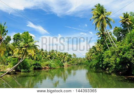 Coco trees reflection at back waters of Kerala India