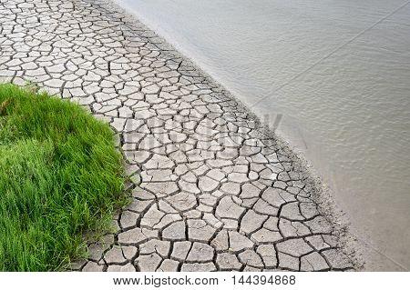 Camargue: european glasswort dried mud and water near La Gacholle lighthouse