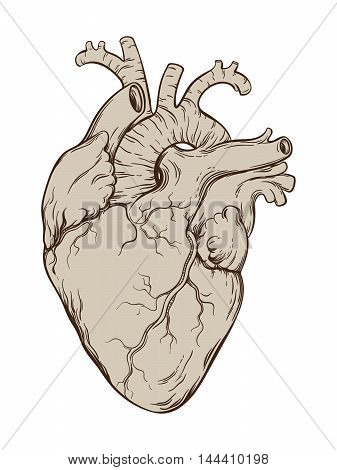Hand Drawn Line Art Anatomically Correct Human Heart. Isolated Over White Background. Vintage Tattoo
