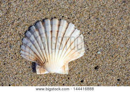 A beautiful sea shell on sand background