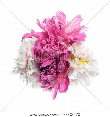 Different Color Peony Flowers