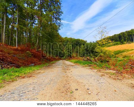 Asphalt road in deciduous forest after wood exploitation