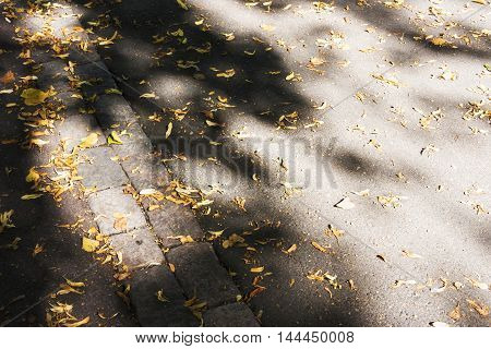 Yellow and brown autumn leaves on asphalt road