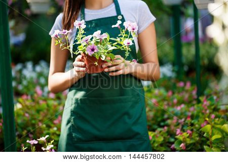 Young beautiful female florist posing among flowers.