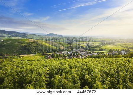 Landscape Of Beaujolais Land With Vineyards And Hills, France