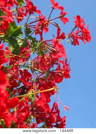 Red Flowers To The Sky!