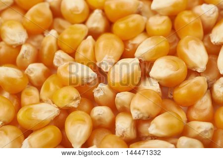 Surface coated with multiple corn kernels as a background composition with a shallow depth of field